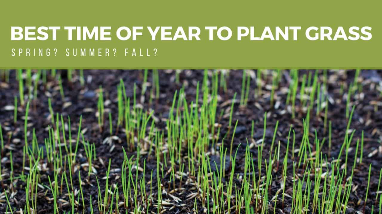 find out the best time of year to plant your new grass so that it grows quickly