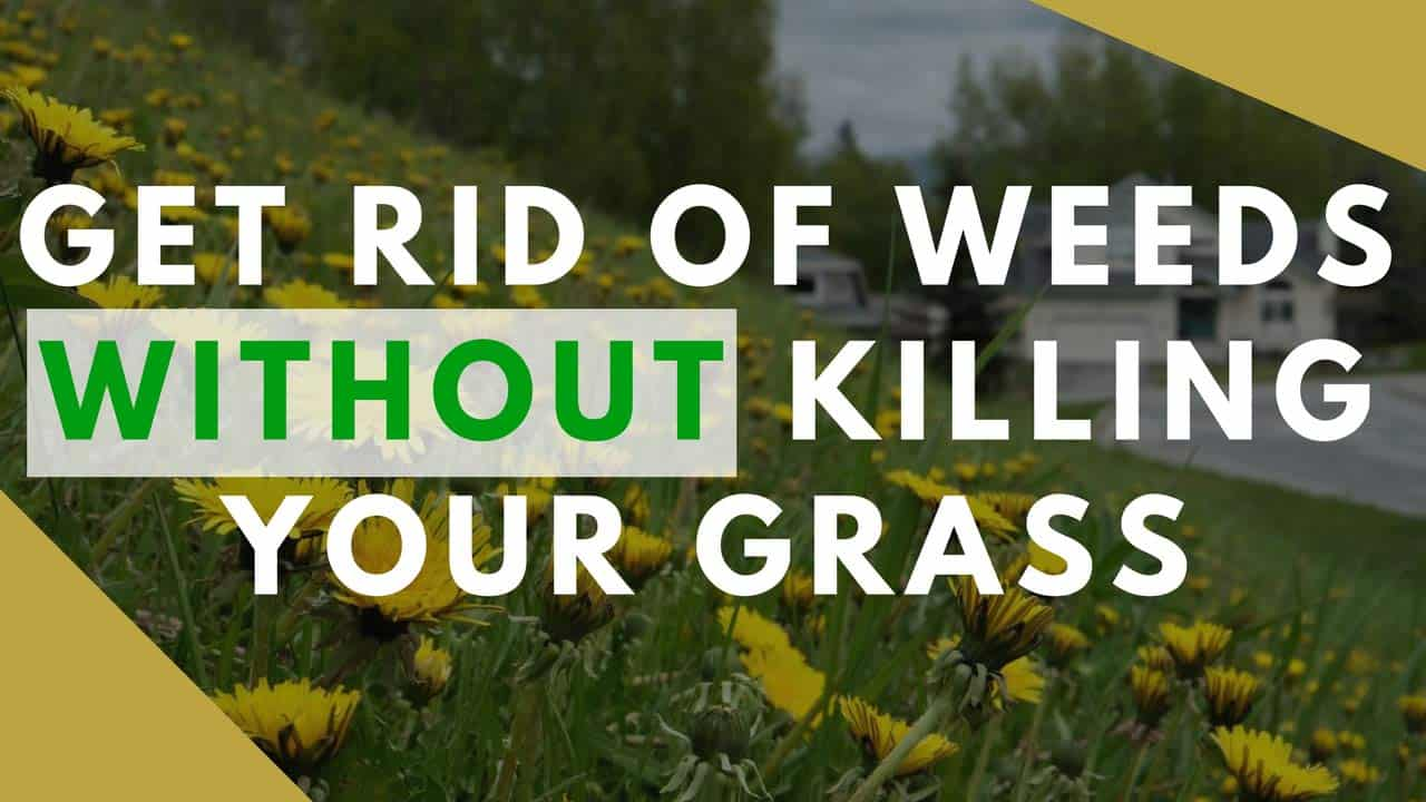 Learn the best ways to get rid of unsightly weeds all without killing your lawn in the process